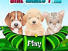 Игра Заботимся о животных